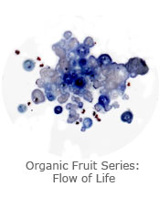 Organic Fruit Series